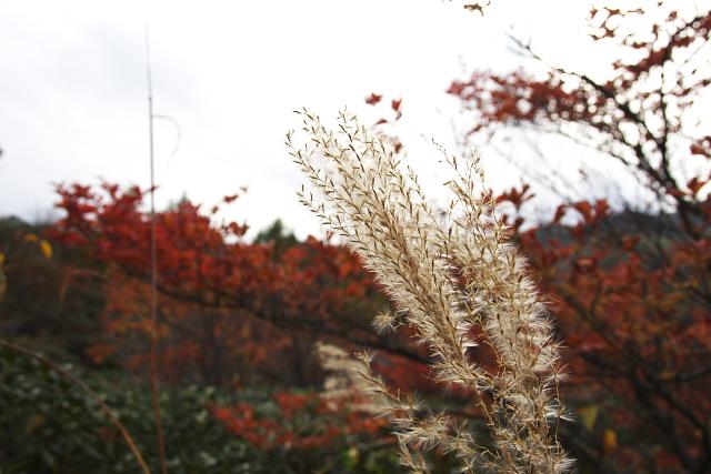 shirane0305_2972.jpg