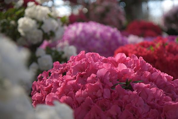 spring1_5733.jpg