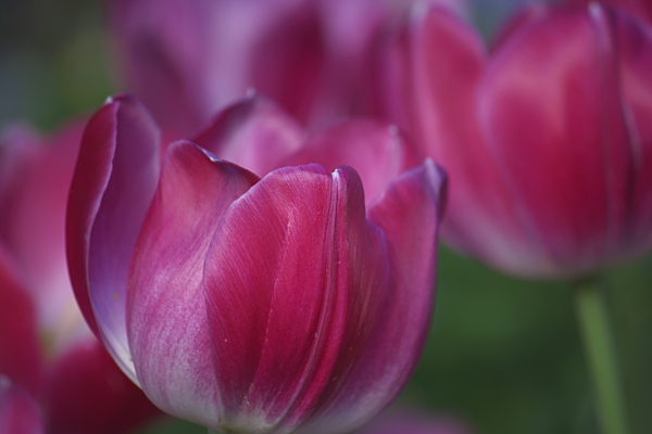 spring1_5735.jpg