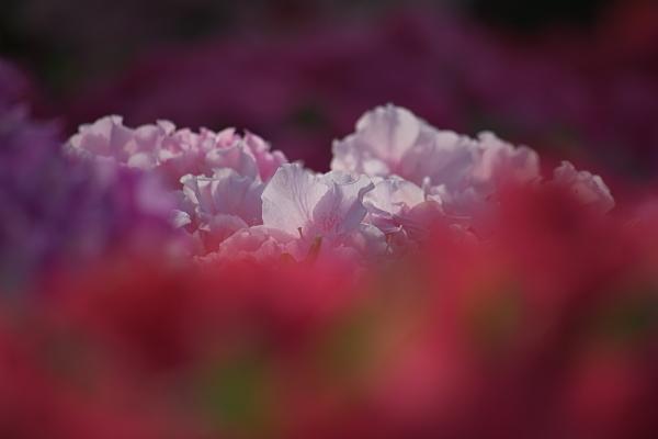 spring1_5737.jpg