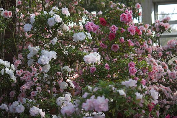spring1_5738.jpg