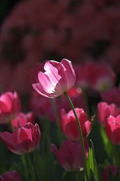 spring1_5740.jpg