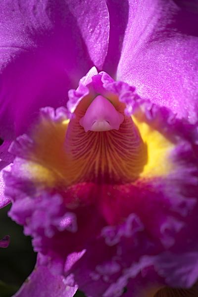 spring2_5700.jpg