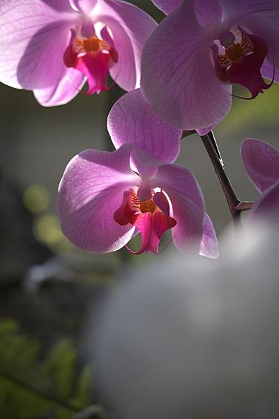 spring2_5721.jpg