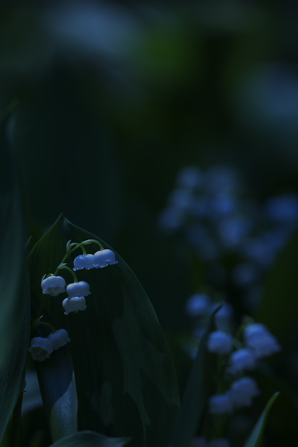 suzu_9084.jpg