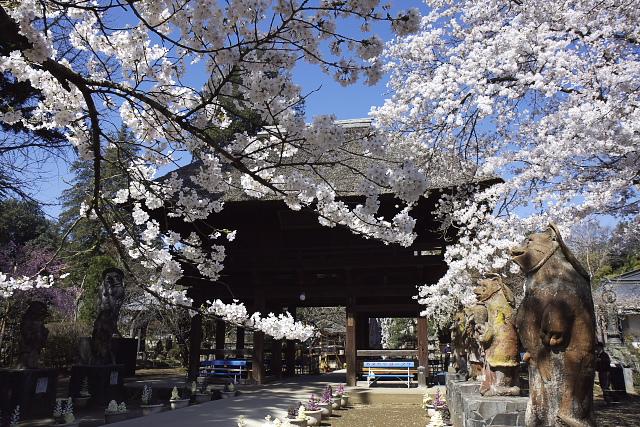 tanuki_7325.jpg