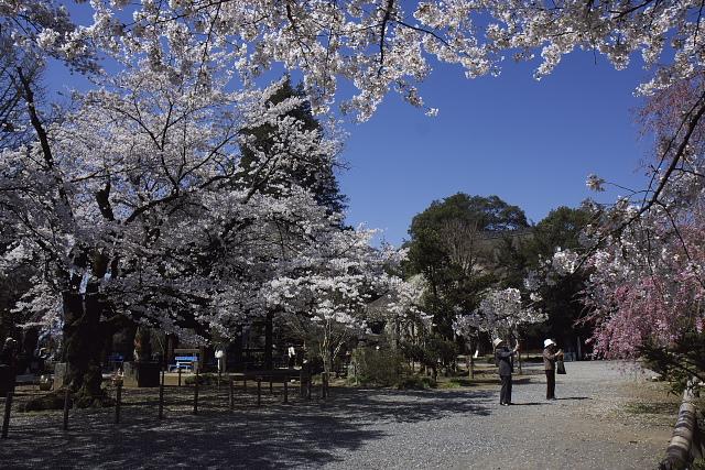 tanuki_7354.jpg