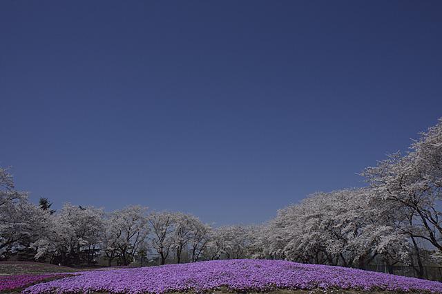 tatebayashi_7366.jpg