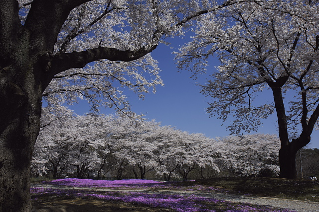 tatebayashi_7397.jpg