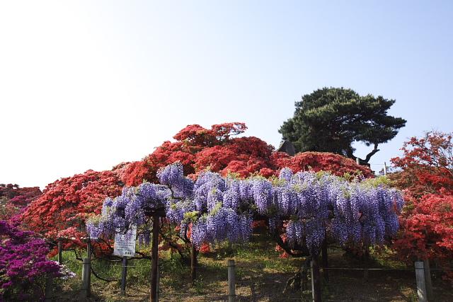 tatebayashi_8528.jpg