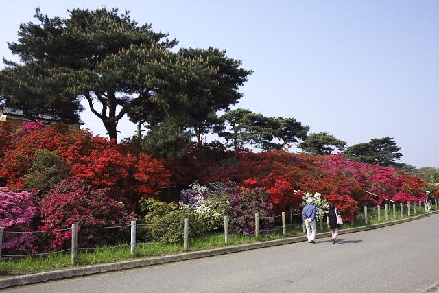 tatebayashi_8568.jpg