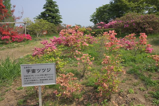 tatebayashi_8618.jpg