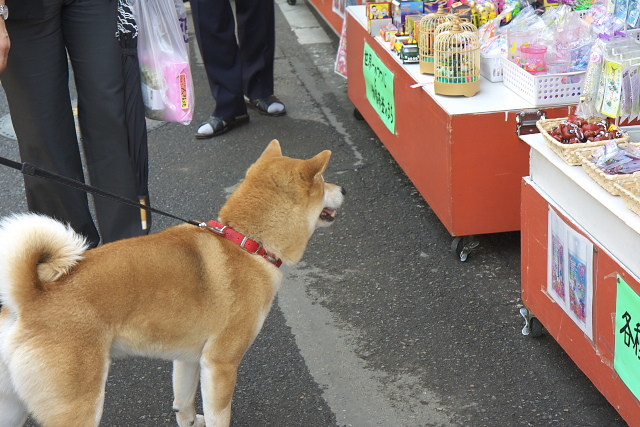 tatebayashi_8638.jpg
