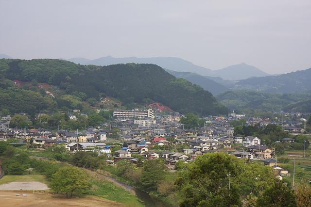 yamabuki_8376.jpg