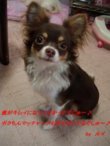 DSCN48466.jpg