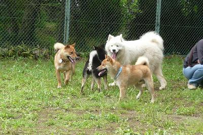 犬飼い会1
