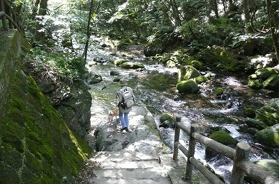 トコトコ階段