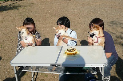 ケーキだ、ケーキだ!