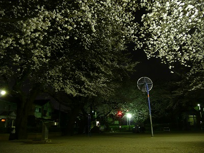 児童公園夜桜