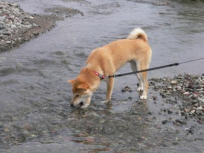 川遊び~♪