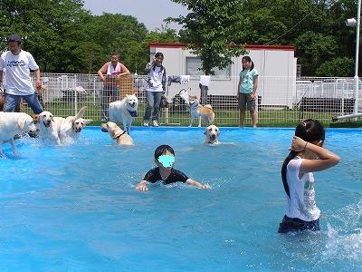 泳ぐ犬と人