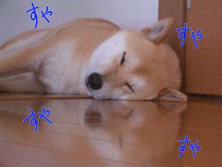 寝顔アップ