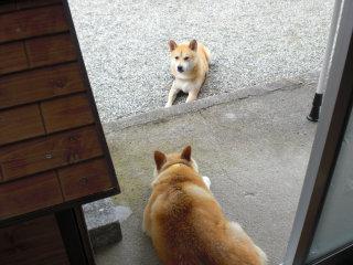 実家の愛犬・はなちゃん