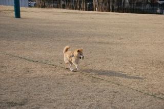 走る、走る、走る!