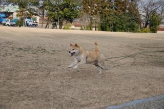 走る、走る、走る、走る!