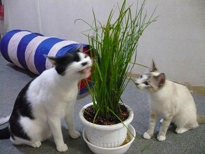 新鮮な草はおいしいニャ