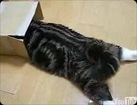 滑り込み猫ちゃん