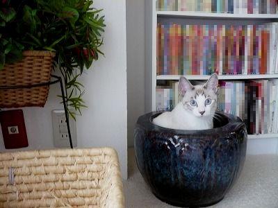 「猫鍋」ならぬ「猫火鉢」でした