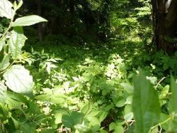 木苺の茂み
