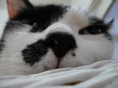 でか鼻フェチの方は、こちら。