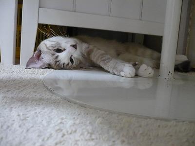 落とし猫だっ!