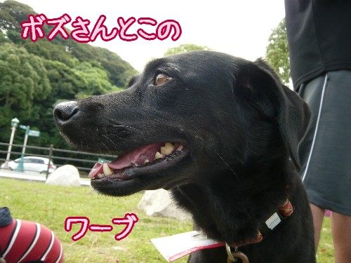 2008 09 07_0240