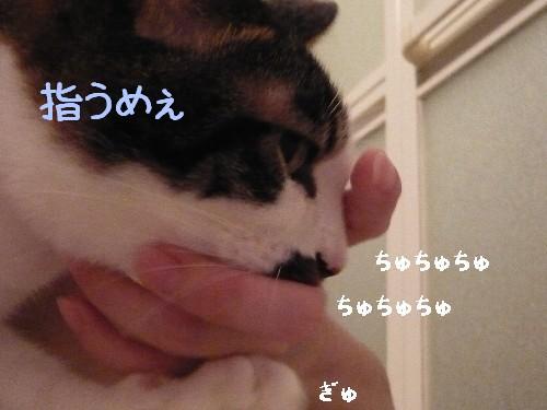 2008 09 16_0526