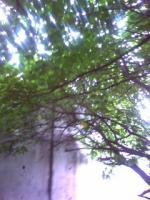 20080914152648.jpg