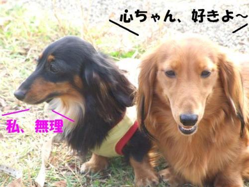 DSCF2611ー編集