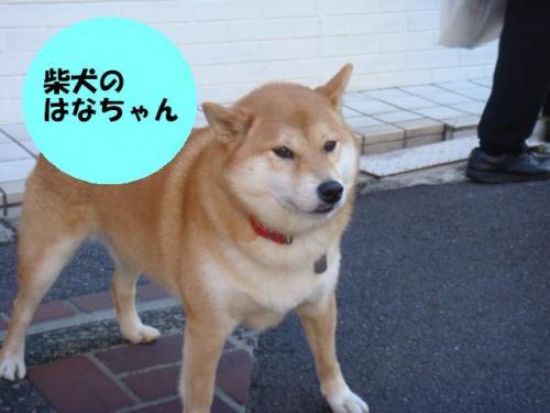 DSC01743ー編集