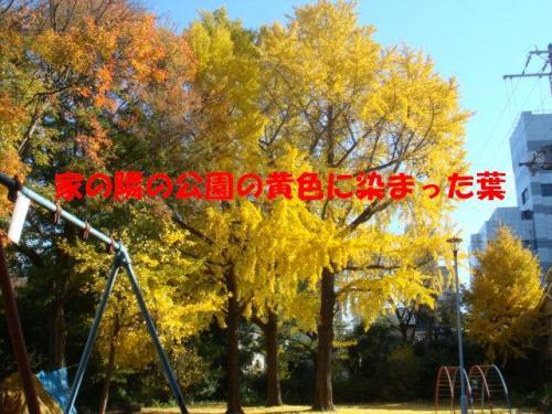 DSC01754ー編集