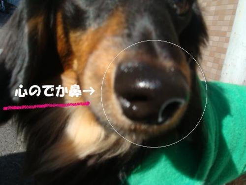 DSC01835ー編集