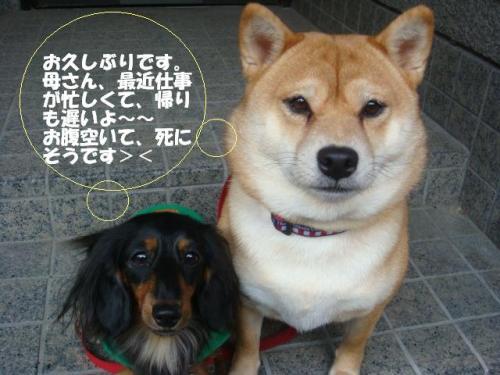 DSC02010ー編集