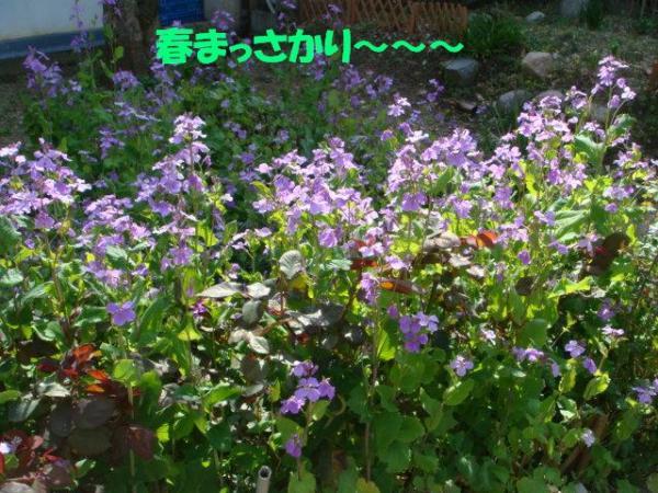 DSC02470ー編集