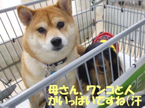 DSCF3100ー編集