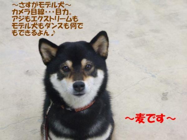 DSCF3108ー編集
