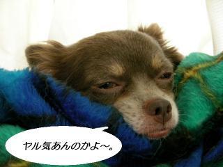 コピー ~ SANY0678