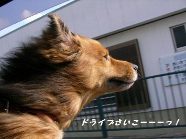 コピー ~ SANY8836