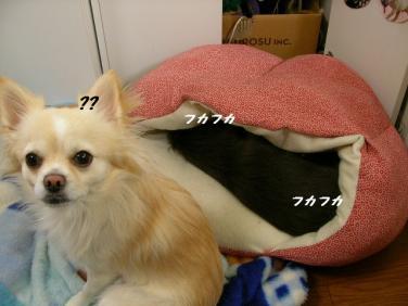 SANY2704.jpg