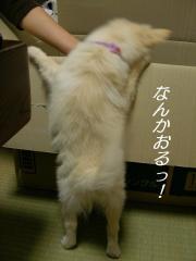 SANY4607.jpg